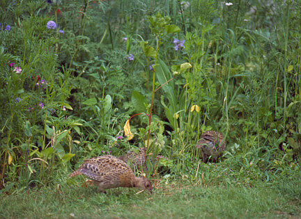PVM Wildweidemengsel speciaal voor haas, fazant en patrijs