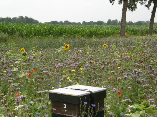 PVM Annual mixture for flowery fields