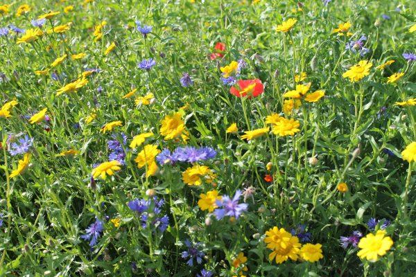 PVM Zonminnend bloemenmengsel