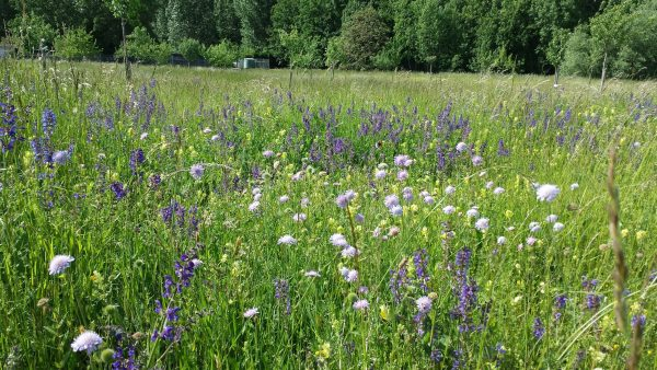 PVM Bloemenmengsel buitengebied