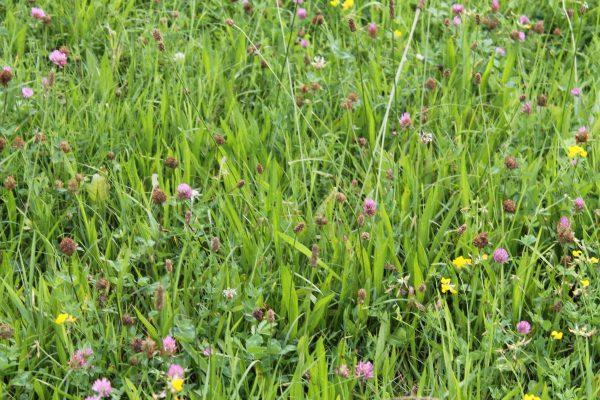 PVM Kräuterreiche Grünlandmischung