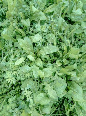 PVM Grass herb mixture for peat soils