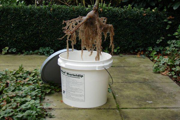 Broadleaf worteldip `a 10 kg